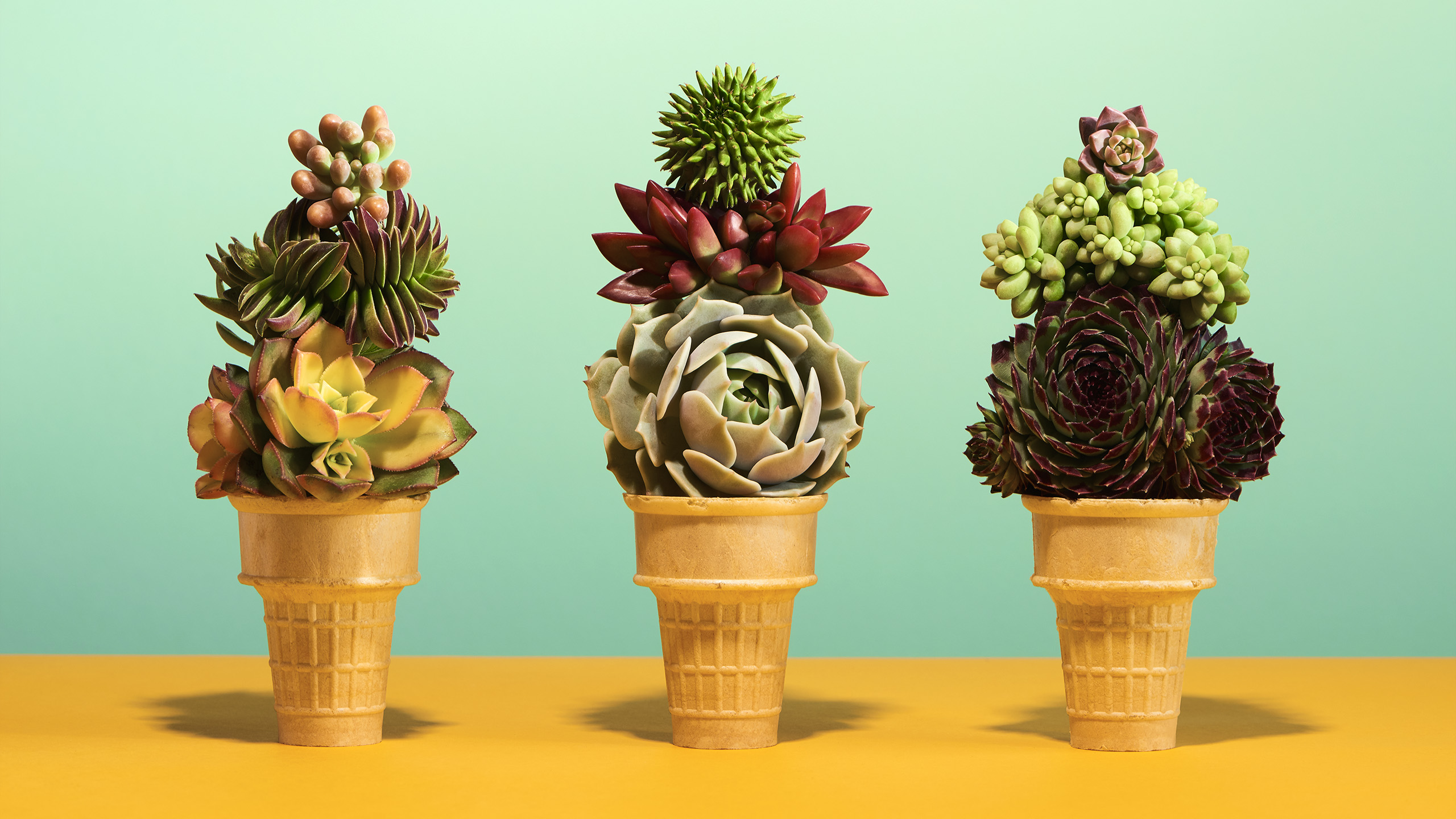 Saulty Succulents PDN Award winner  styled by Jessica Stewart Prop Stylist Specializing in conceptual Imagery and Styling
