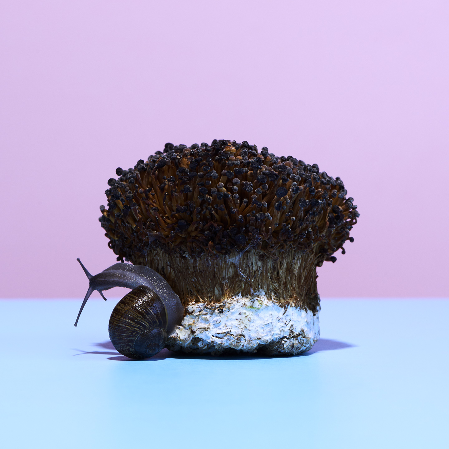 Magic Mushrooms styled by Jessica Stewart Prop Stylist Specializing in exotic animal Imagery and Styling